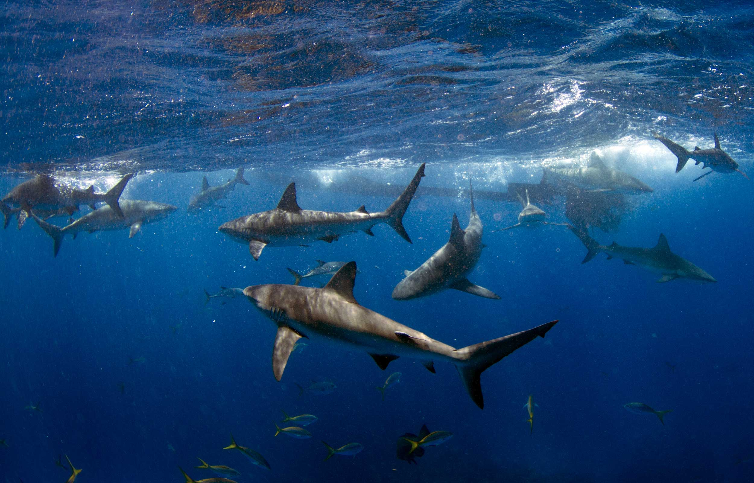 Key West Fishing Charters | Far Out Fishing – Capt. Chris Mendola